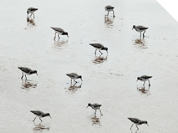 2016 Photography winner, Steve Deer - The Birds (detail)